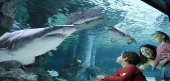 Parco le Navi acquario Cattolica RN