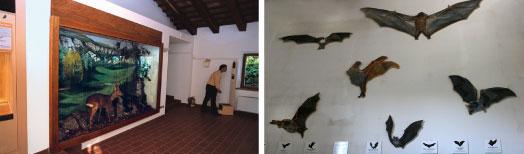 Museo naturalistico e Riserva Naturale Orientata di Onferno Gemmano RN